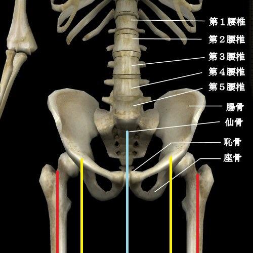 股関節 軸の位置