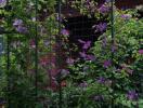 9 ベノサバイオレシア 20121_convert_20110103140620