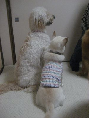 blogpictures10 052