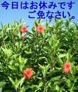 image yasumi