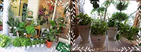 十二八 花屋 観葉植物-horz 統合