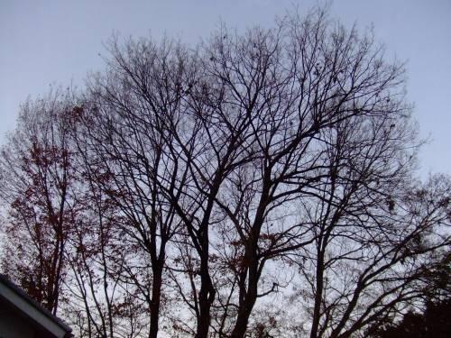 葉の落ちた木の枝がきれい