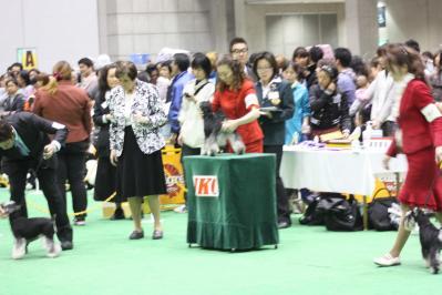 2010ジャパンインター BOB戦(11)