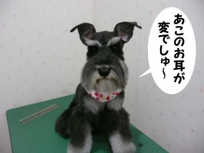 あこちゃん2010.05.08 01