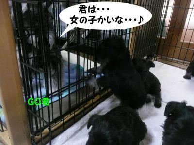 雅っ子とGO11月11日