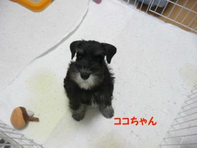 雅っ子ココ1月6日