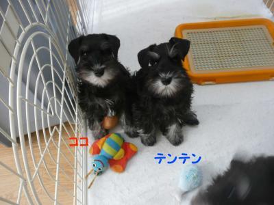 雅っ子ココとテンテン1月14日