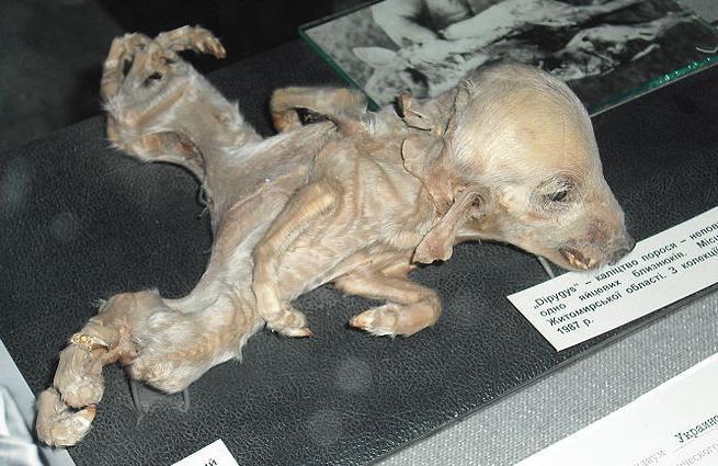 [長崎原爆]悲しみの画像・美輪さんが涙で語る動画「繰り返させません。アメリカ人に」