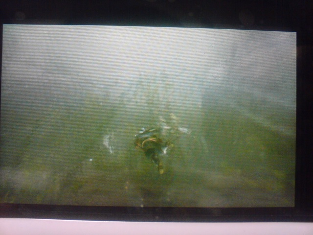 水没林の水中