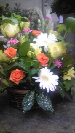 レン君の花