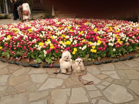 グラバー園バラの前で