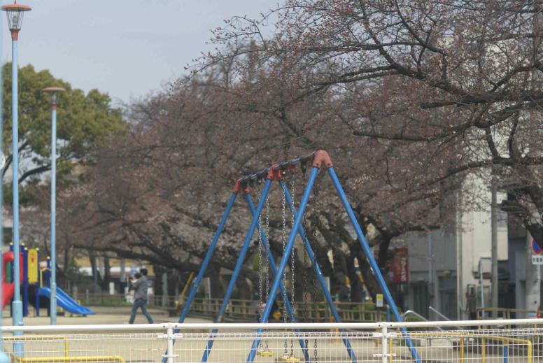 324sakura-daikou