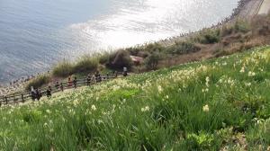 灘黒岩水仙郷3_convert_20110130150532