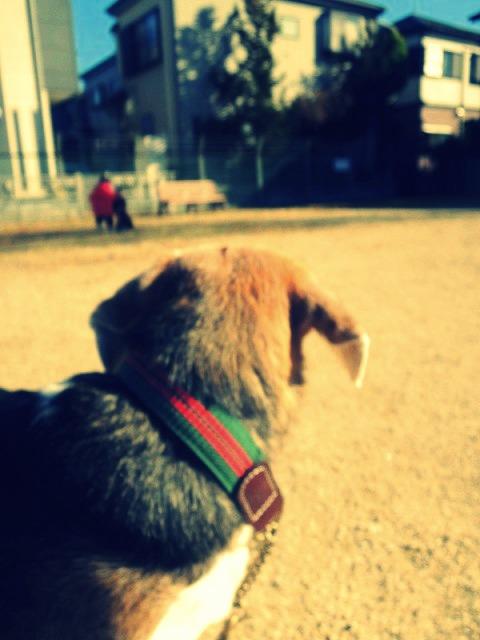 14_20121210171912.jpg