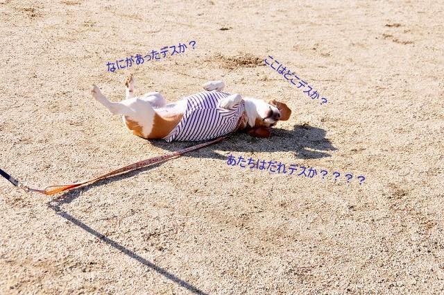 27_20130129002407.jpg