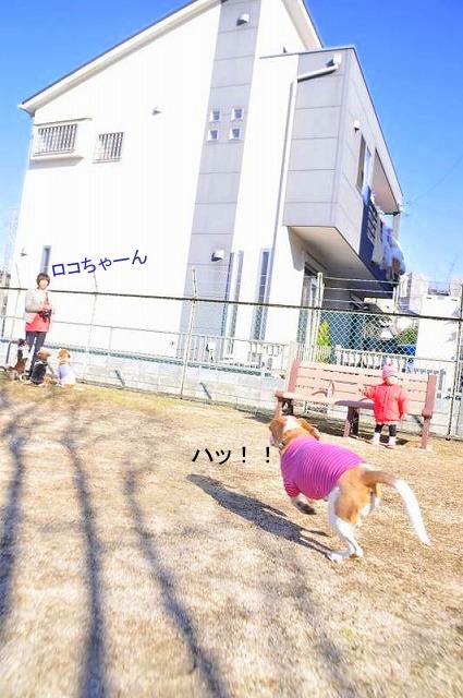 3_20130129000608.jpg