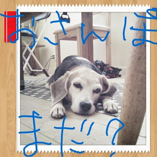 5_20121206161816.jpg