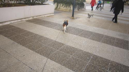 ギネス散歩