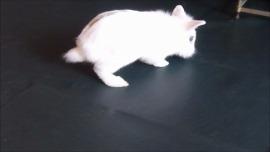 milkoo3.jpg