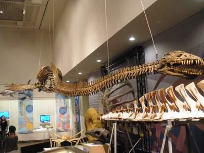 大阪市立自然史博物館01