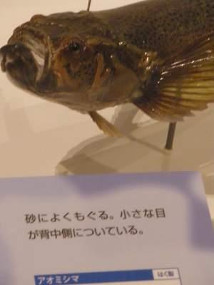大阪市立自然史博物館02