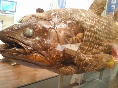 大阪市立自然史博物館03