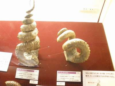 大阪市立自然史博物館04