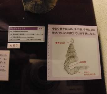 大阪市立自然史博物館05