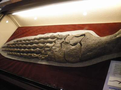 大阪市立自然史博物館06