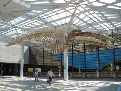 大阪市立自然史博物館07