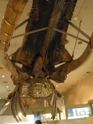 大阪市立自然史博物館08