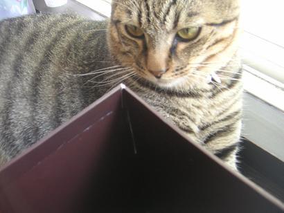 箱猫mini