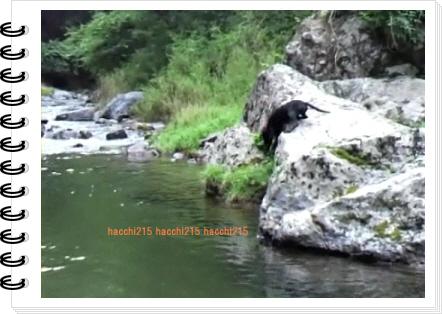2011.7.2 京北町川遊び.wmv_000077833