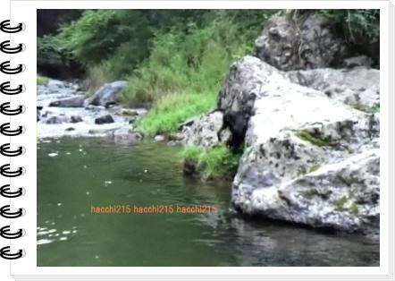 2011.7.2 京北町川遊び.wmv_000078200
