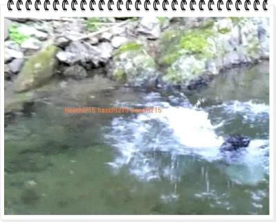 編集_2011.7.2 京北町川遊び.wmv_000414333