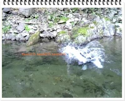 編集_2011.7.2 京北町川遊び.wmv_000414066