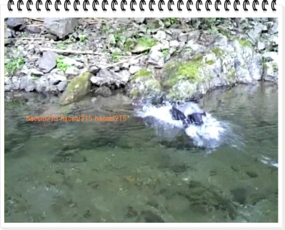 編集_2011.7.2 京北町川遊び.wmv_000413933