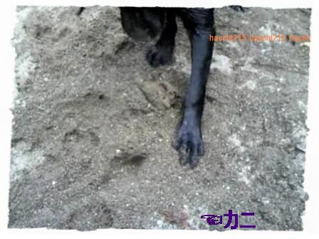 2011.7.2 京北町川遊び.wmv_000598000