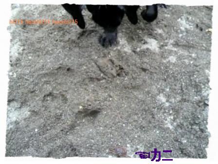 2011.7.2 京北町川遊び.wmv_000597633