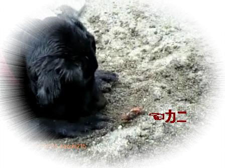 2011.7.2 京北町川遊び.wmv_000502333