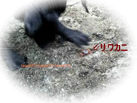 2011.7.2 京北町川遊び.wmv_000495066