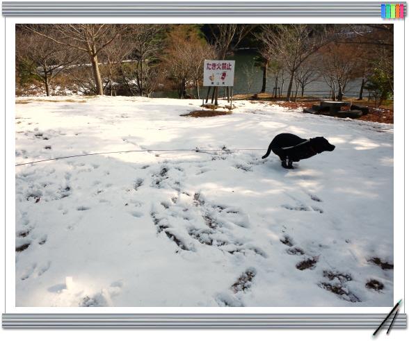 編集_DSC_0093 - ショートカット