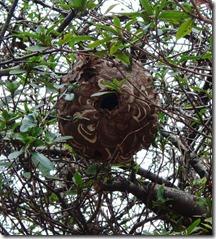 13022393 ハチの巣