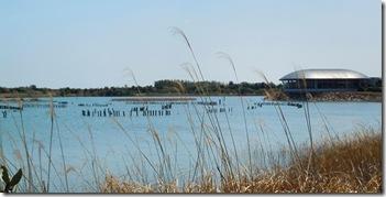 13040306 淡水池の水鳥たち