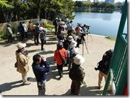 13041306 池の杭にいたユリカモメを観察