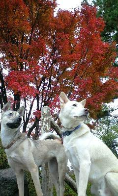 紅葉と紡とハクと
