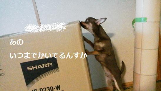 DCIM0423_20130713191101.jpg
