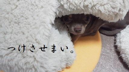 harutoji-to.jpg