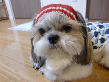 太郎の帽子