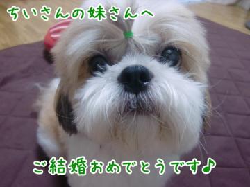 CIMG1183_4_20131006235023609.jpg